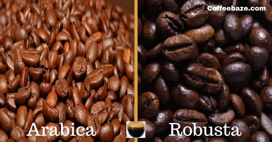 Arabica Vs Robusta : Differences of the Taste