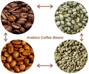 arabica coffee brands